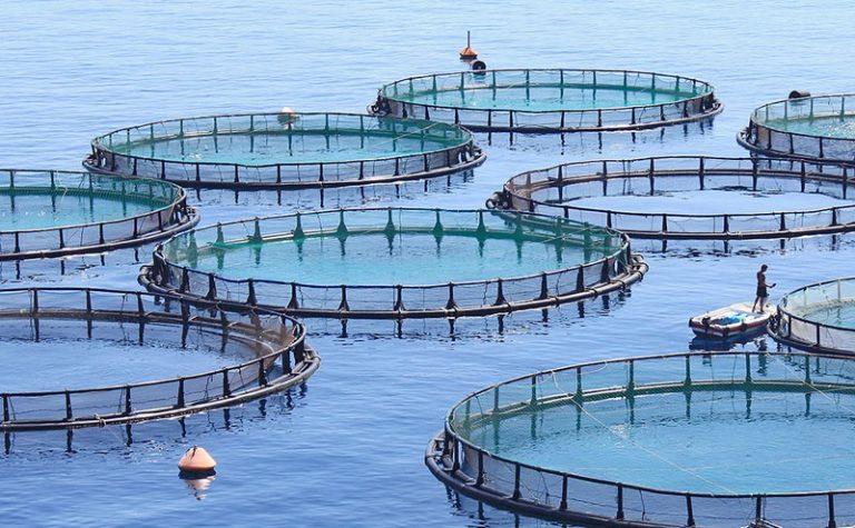 Fish-farm-hero-wikimedia-opt