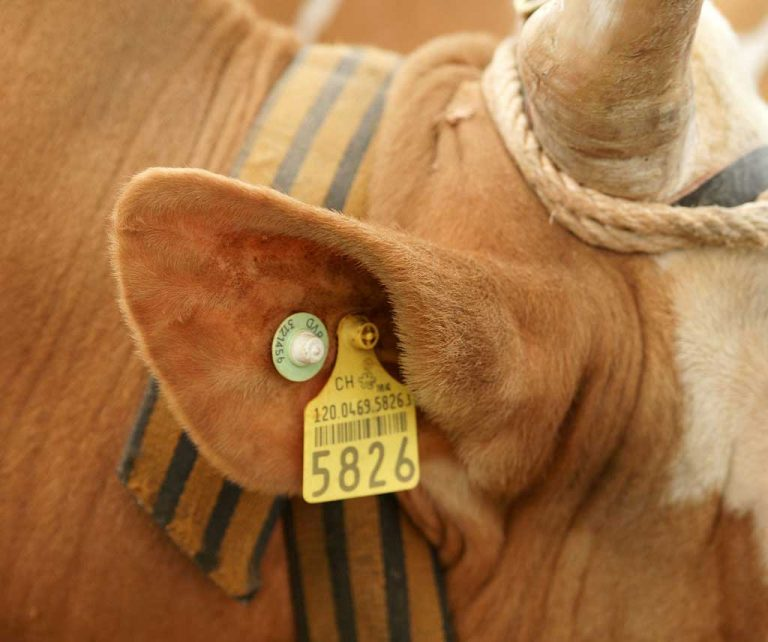 Cattle tracking tag