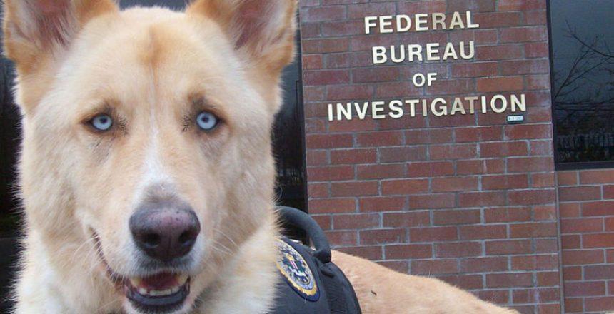 Dog_FBI